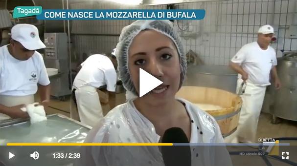 Come Nasce La Mozzarella di Bufala